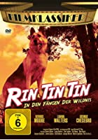 Rin Tin Tin In den Fängen der Wildnis