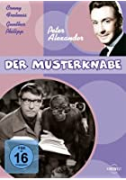 Der Musterknabe
