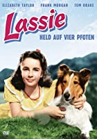 Lassie - Held auf vier Pfoten