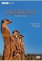 Meerkats - Part of a Team