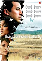 The Great Indian Butterfly