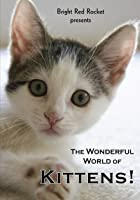 The Wonderful World of Kittens