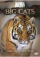 Discovery Channel - Big Cats - Amba The Russian Tiger