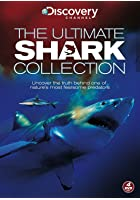 The Ultimate Shark Collection