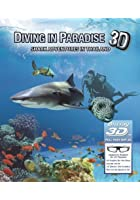Diving In Paradise - Shark Adventures In Thailand