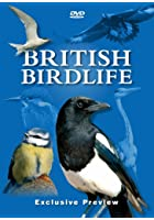Best of British Birds