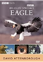 Wildlife Special - Eagle
