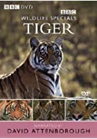 Wildlife Special - Tiger