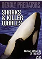 Deadly Predators - Sharks And Killer Whales
