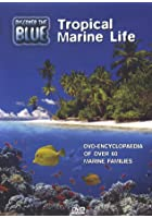 Discover The Blue - Tropical Marine Life