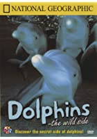 National Geographic - Dolphins - The Wild Side