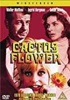 Cactus Flower