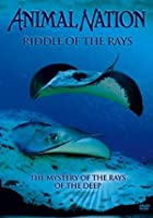Animal Nation - Riddle Of The Rays
