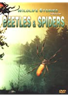 The Whole Story: Beetles And Spiders
