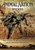 Animal Nation - Spiders - The Whole Story