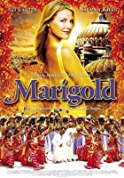 Marigold