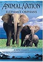 Animal Nation - Elephant Orphans