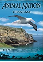 Animal Nation - Northern Royal Albatross