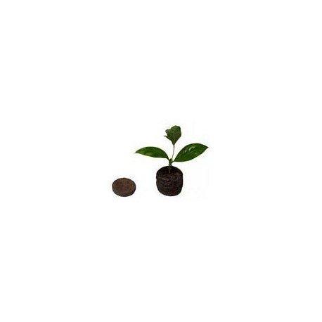 disque-de-germination-en-tourbe-jiffy