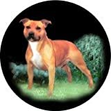 Welsh Slate Coasters, Gift Box of 4: Staffordshire Bull Terrier