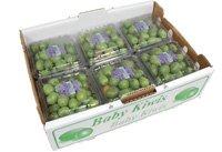 【箱売り】 ベビーキウイ 1箱(12パック×130g) チリ・アメリカ・ニュージーランド産 【業務用・大量販売】 baby kiwis(kiwiberry)