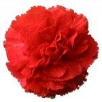 Bulk Carnations | Red | 400