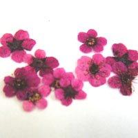 押し花 107 ピンク