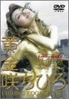 黄金の窓~黄金咲ちひろの開運世界 [DVD]