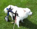 Dog Wheelchair - Medium - Made By Walkin' Wheels