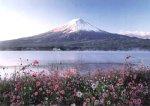 500ピース 秋桜と富士