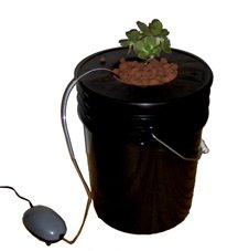 Black Bucket Deep Water Hydroponic System