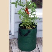 Bosmere K715 Patio Tomato Planter Bag, Green, 3-Pack (Tomato Patio compare prices)