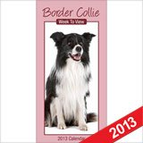 Border Collie Wtv S 2013