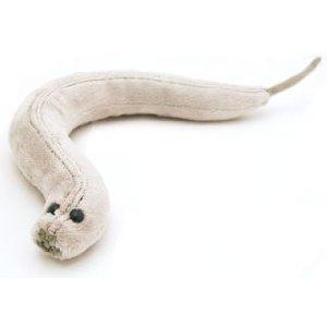 Giant Microbes C. Elegans (Caenorhabditis elegans) Stuffed Plush Toy