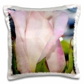 Patricia Sanders Flowers - light pink rose bud - 16x16 inch Pillow Case
