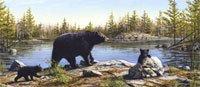 Black Bears Rear Window Graphic