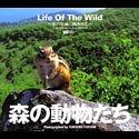 森の動物たち Life Of The Wild