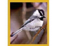 Gift Trenz Mountain Chickadee Magnetic Bookmark - 1