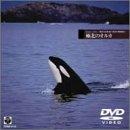Echoes of Sea(4) 海洋写真家 水口博也の映像紀行 極北のオルカ [DVD]