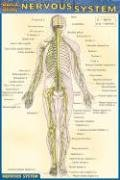Pocket Nervous System Laminated Reference Guide (Quickstudy)