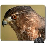 Hawk-Eye Mouse Pad, Mousepad (Birds Mouse Pad)