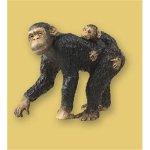 Chimpanzee (チンパンジー)
