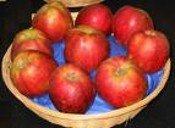 Red Gravenstein Apple Tree Five Gallon