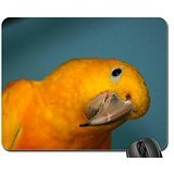 Curiouser and Curiouser Mouse Pad, Mousepad (Birds Mouse Pad)