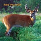 White-Tailed Deer Plato Wall - 2008 Calendar - Animals - Wildlife - Buy White-Tailed Deer Plato Wall - 2008 Calendar - Animals - Wildlife - Purchase White-Tailed Deer Plato Wall - 2008 Calendar - Animals - Wildlife (Calendars, Office Products, Categories, Office & School Supplies, Calendars Planners & Personal Organizers, Wall Calendars)