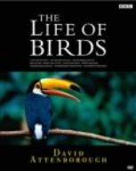 BBC ライフ・オブ・バーズ/鳥の世界 DVD-BOX