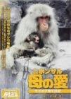 ニホンザル 母の愛-モズの子育て日記- [DVD]