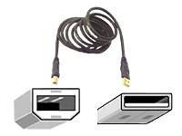Belkin F3U133-10-GLD 10ft USB 2.0 A/b Device - 10ft from Belkin Components