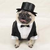 Casual Canine Dog Tuxedo - Dog Costume - Medium