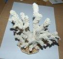 Künstliche Koralle